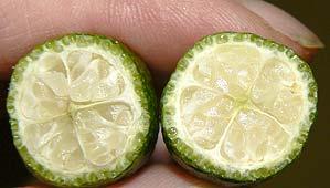 Cut Microcitrus garrawayi fruit